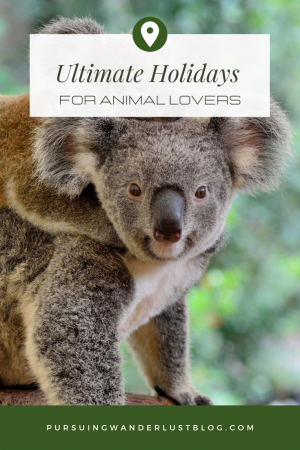 ultimate holidays for animal lovers